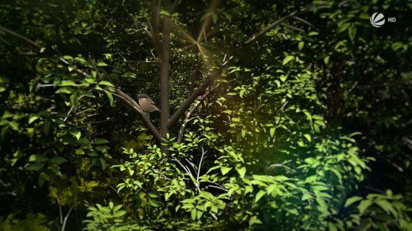 Studio-Christian-Dueckminor-Sat1-Operation-Wald-Styleframe-01